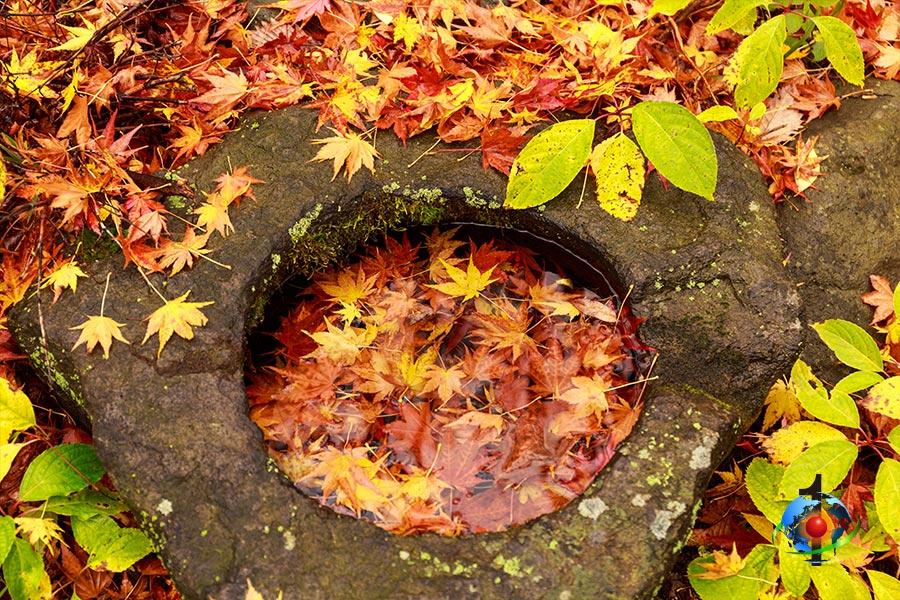 秋の掃除リサイクル